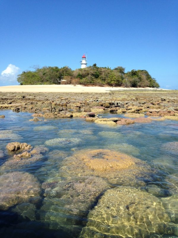 Low Isles tours with fishing for nannygai, coral trout in the Coral Sea before snorkeling off Great Barrier Reef sand cay