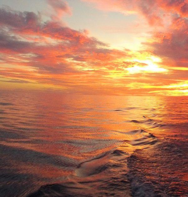 Port Douglas Fishing night fishing inshore reef fishing estuary fishing barramundi coral trout