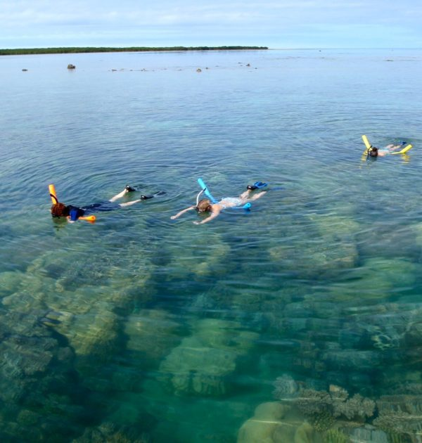 the great barrier reef low isles reef sprinter snorkel turtles