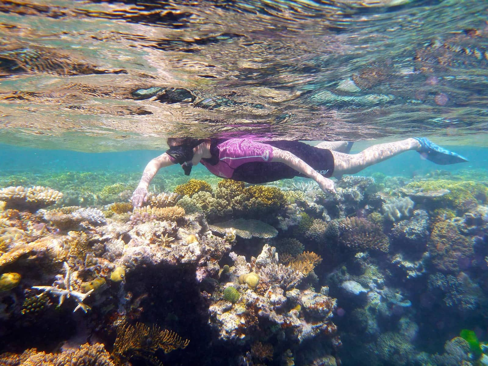 Image result for Swim the Great Barrier Reef