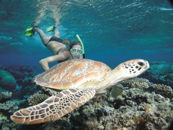 Low Isles cruise adults only snorkel sail with Sailaway