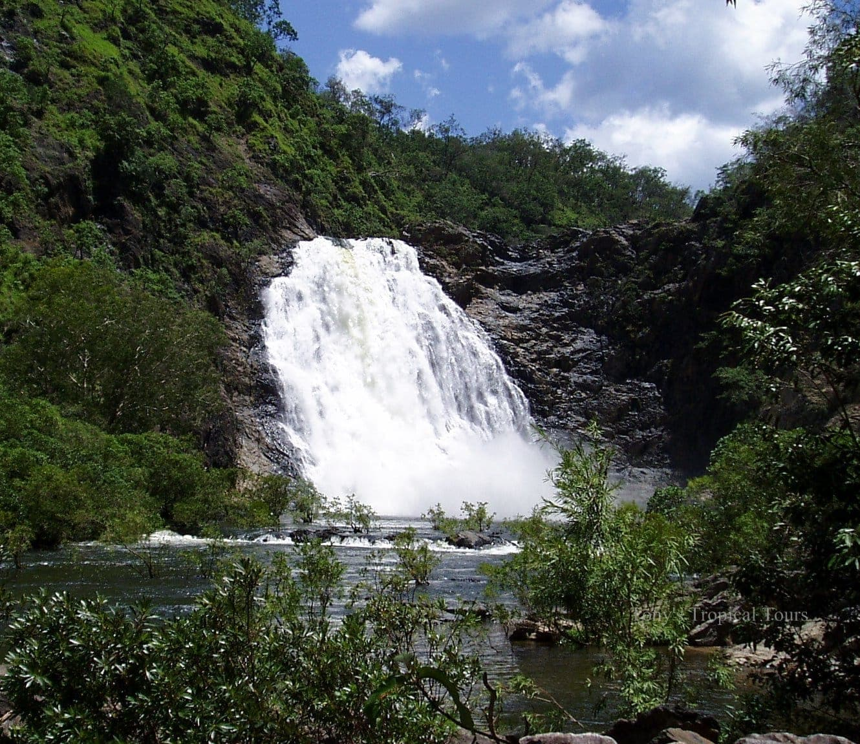 tonys tropical tours including rainforest plants in cape tribulation daintree national park