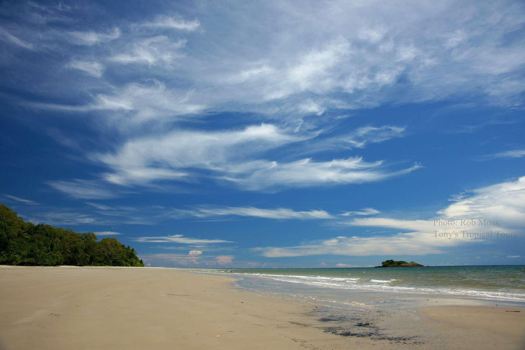 Daintree Rainforest Tony S Tropical Tours Adventures
