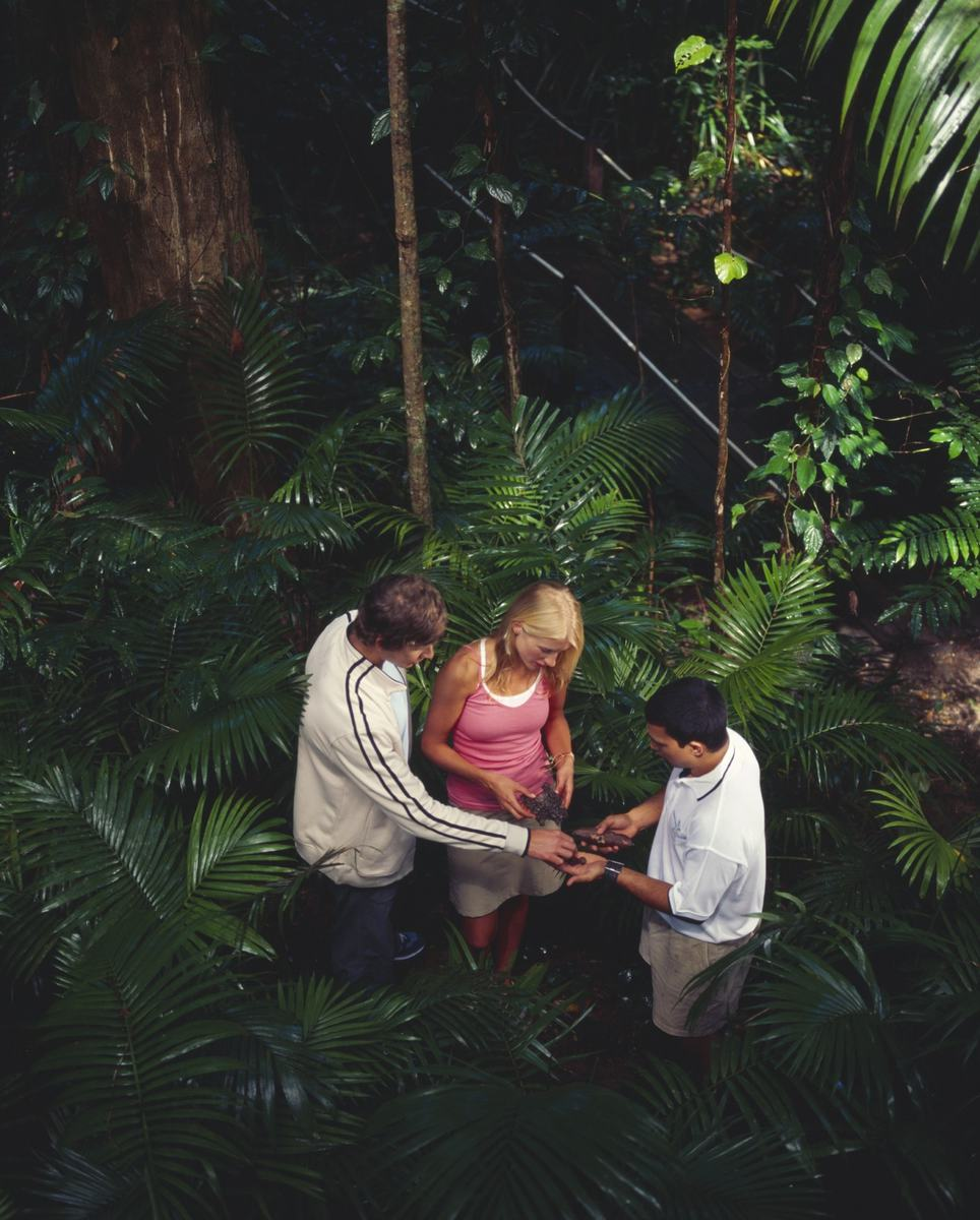 Experience the Daintree Rainforest with an authentic Aboriginal guide