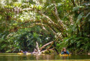 Snorkeling Port Douglas in the Daintree Rainforest along the Daintree River