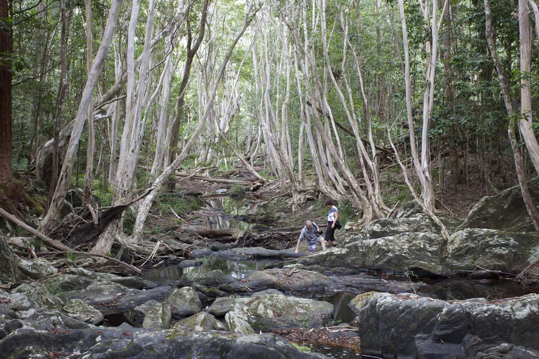 Discover amazing rainforest facts while exploring the Daintree