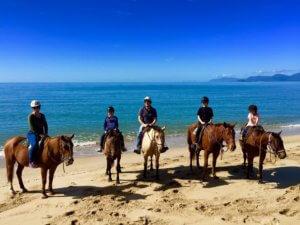 horseback riding on the beach horse riding port douglas wonga beach daintree rainforest coral sea