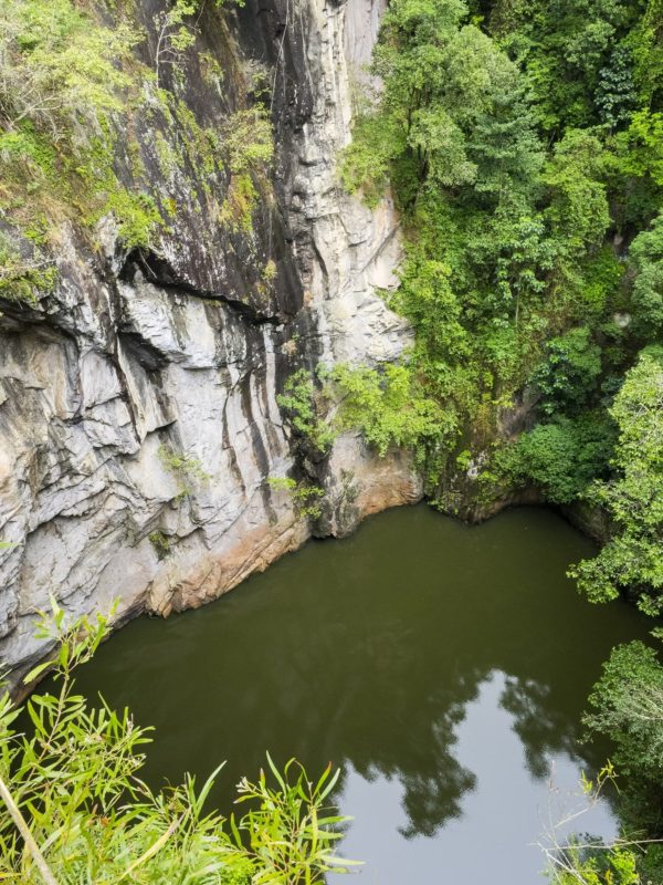 Atherton Tablelands tours including waterfalls, wetlands, Lake Barrine cruise, fig tree