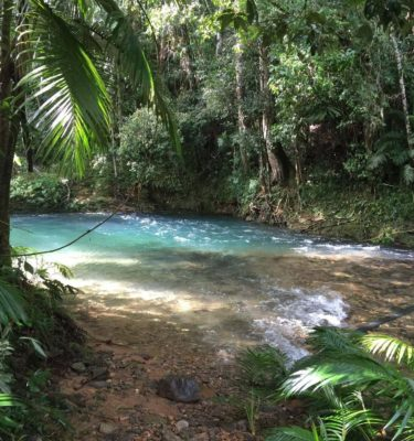 Discover breathtaking rainforest waterholes on your way to Cape Tribulation in the Daintree Rainforest
