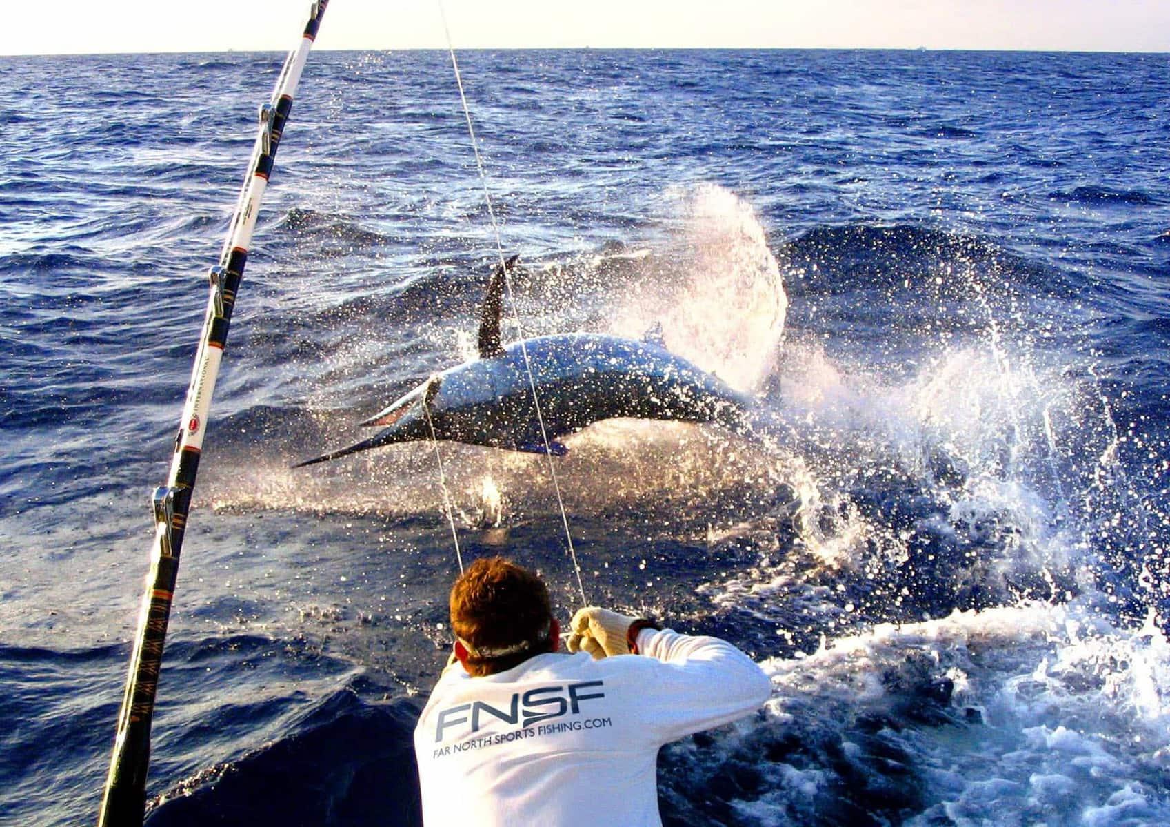 Marlin fishing port douglas far north sports fishing for Marlin fishing charters